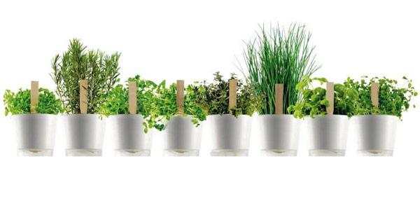 Laboratori per orto e giardino urbano invernale l 39 asilo for Giardino invernale